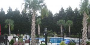 pool-palms